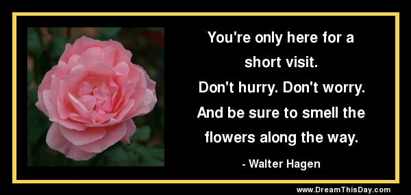 Flowers Quotes And Sayings Quotes About Flowers And Love Gorgeous Love Images With Quotes On Flowers